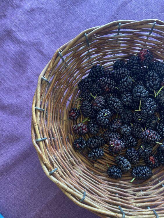 Super Mulberry